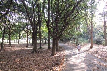 สวนสาธารณะเนงิชิ ชินริน ในโยโกฮาม่า