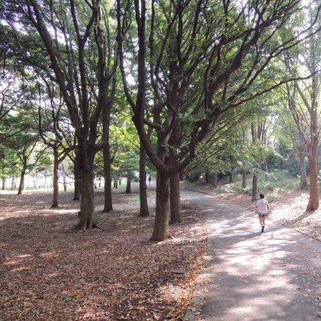 Negishi Shinrin Park, Yokohama