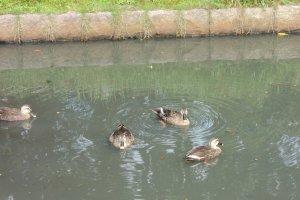 Ducks enjoying the beautiful weather, too