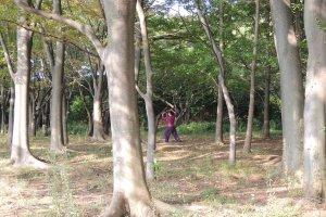 Tai Chi under the trees