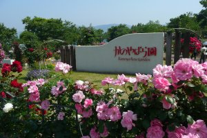 The Kanoya Rose Garden is Japan's largest rose garden