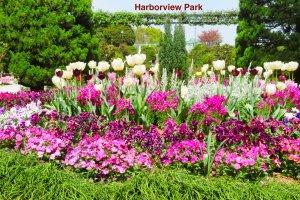 Harbor View Park near the fountain