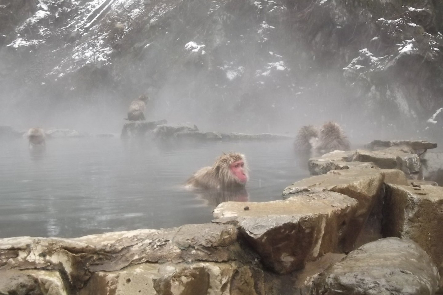 It\'s not far to the snow monkeys\' onsen