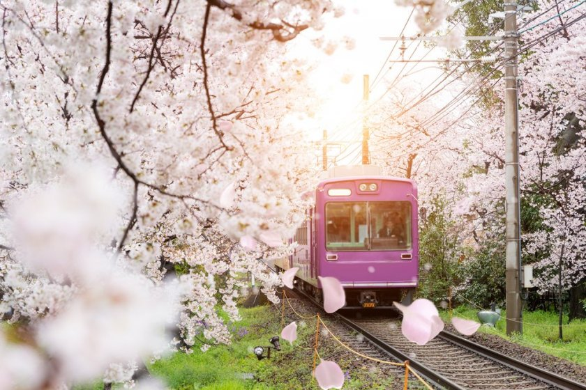 Kyoto in spring: nothing is lovelier!