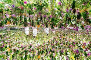 Floating Flowers: Latest 3D Garden Exhibition From TeamLab Planets