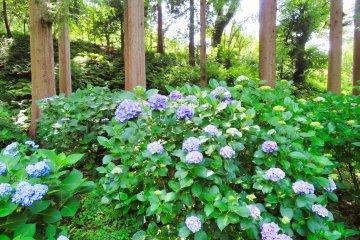 Yokohama Children's Botanical Park near main entrance