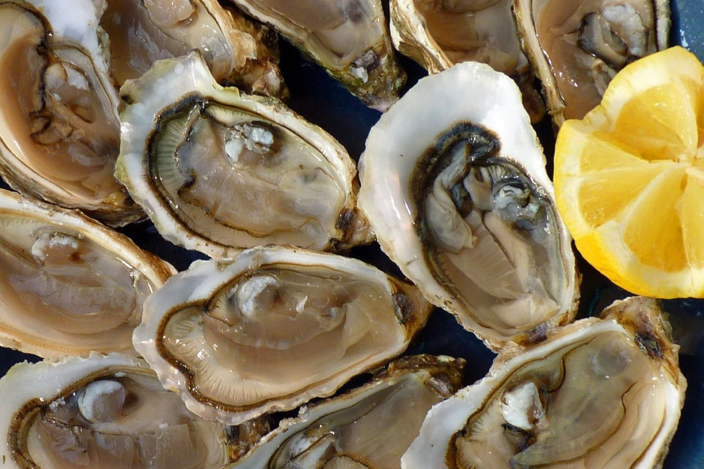 Oysters are a specialty of the Nitoyo Coast area