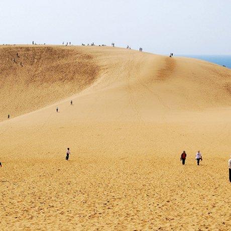 鳥取砂丘與海,奇幻又稀有的海邊沙漠