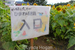 Sayama Sunflower field