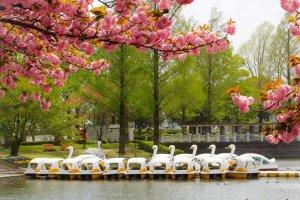 Swan boats at Kawagoe Park