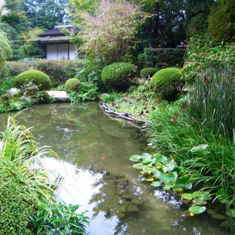 Khu vườn hoang vu của đền Shisendo