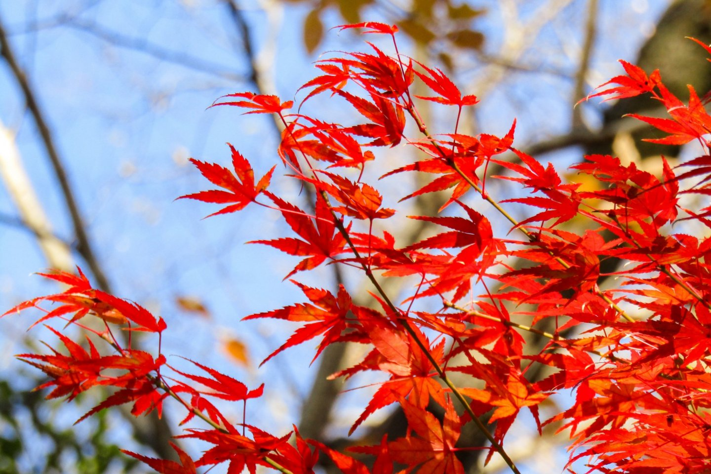 From autumn leaves to salvia and cosmos, the event is packed full of seasonal color