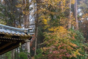 The grounds of Toshogu Shrine in autumn