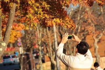 5 Fall Foliage Destinations in Tochigi