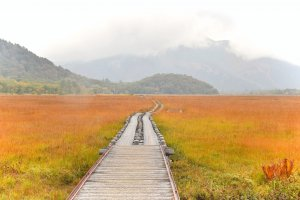 Oze National Park is a popular hiking spot, especially in autumn
