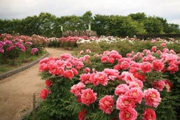 Gosen City Flower Tree Festival
