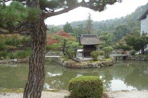 Contemplative pond