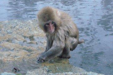 Công viên khỉ- Jigokudani