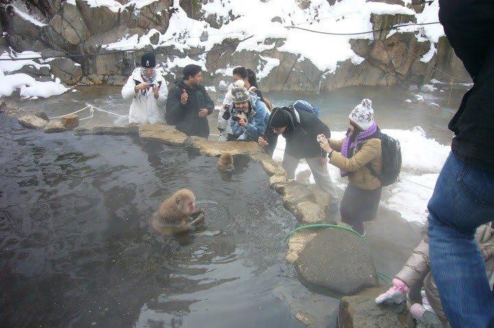 Tourists are taking photos of Oyaji (father type) monkey