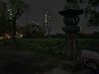 Japanese lantern in Shinobazu Pond at Ueno Park