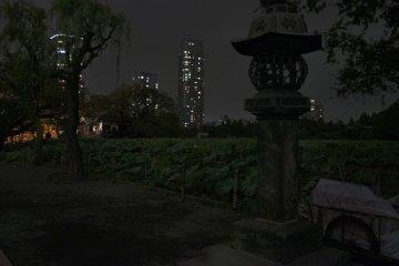 우에노 공원 시노바즈 연못의 일본 등