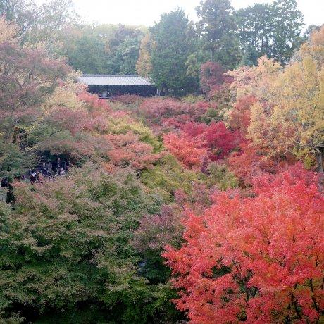 Autumn at Tōfuku-ji