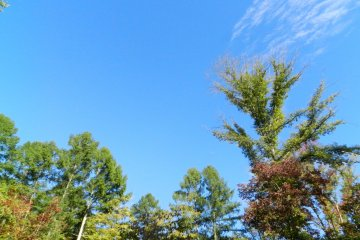 A sunny Saturday morning at Harunire Terrace.
