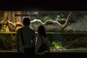 The Sunshine Aquarium next to Namco Namja Town in Ikebukuro was a really popular place for dates