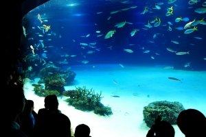 The magical underwater world of Sunshine Aquarium Ikebukuro