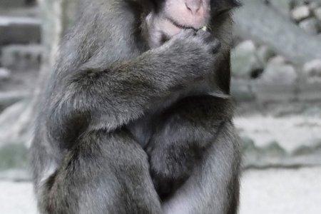 Công viên Khỉ Takasakiyama