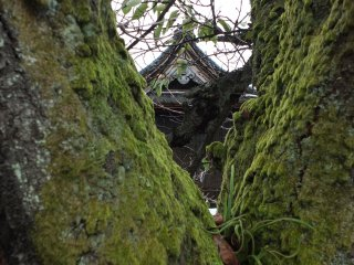 Most temples in Fukui seem to have moss