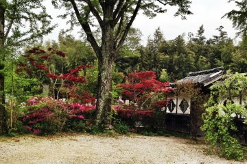 <p>Beautiful trees permeate the temple grounds</p>