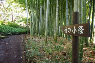 A little patch of bamboo forest enhances the traditional atmosphere of the Tonogayato garden.