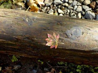 갓 떨어진 잎