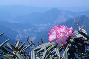 봄에 활짝 핀 꽃
