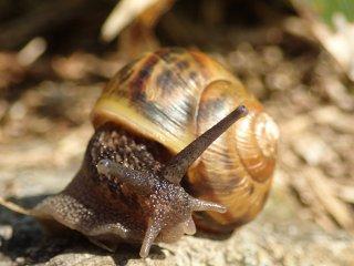 산을 타는 달팽이