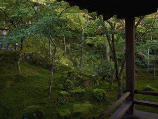 """En muchos de estos jardines Zen, el musgo es usado como cubierta para crear """"tierra"""" repleta de bosques."""