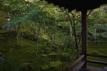<p>En muchos de estos jardines Zen, el musgo es usado como cubierta para crear &quot;tierra&quot; repleta de bosques.</p>