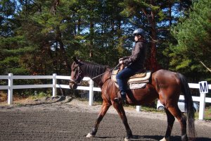 Before I could go on the forest trail, I was given some training in the arena.