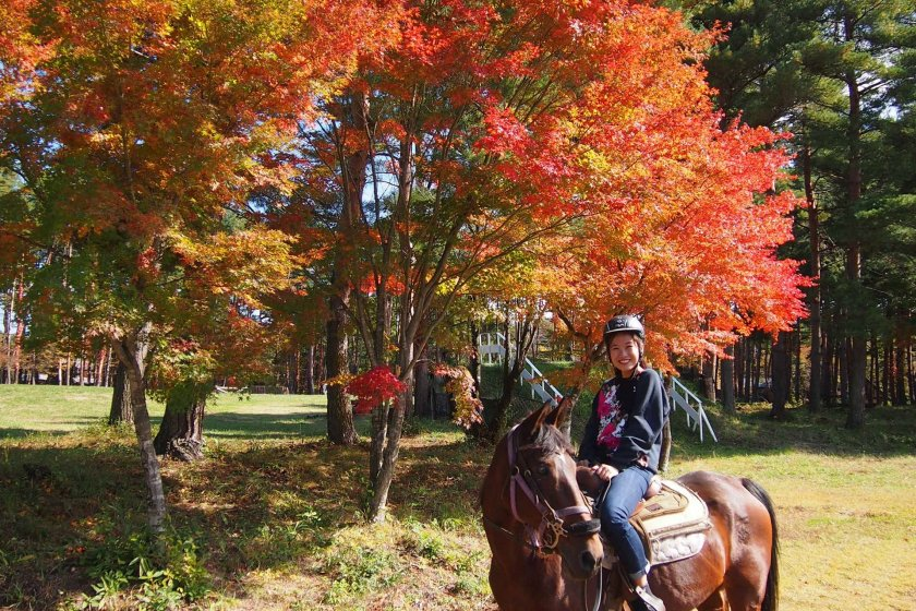 The momiji were already a stunning red in early autumn, a beautiful sight to behold.