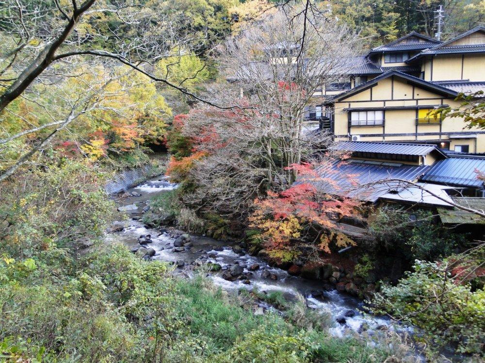 ต้นไม้สีสดตามแนวแม่น้ำ