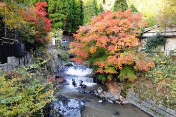 Осенью листва ошеломляет своими цветами
