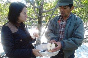 คุณนากาโกมิ ซันหั่นแอปเปิ้ลให้เราชิม