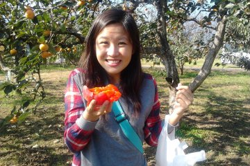 Picking fruits at Nakagomi Orchard!