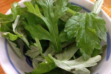 โยะโมะกิ ในภาษาญี่ปุ่น แต่ที่โอะกินะวะเรียกกันว่า ฟุอุชิบะ เป็นผักที่มีรสขมช่วยรักษาโรค