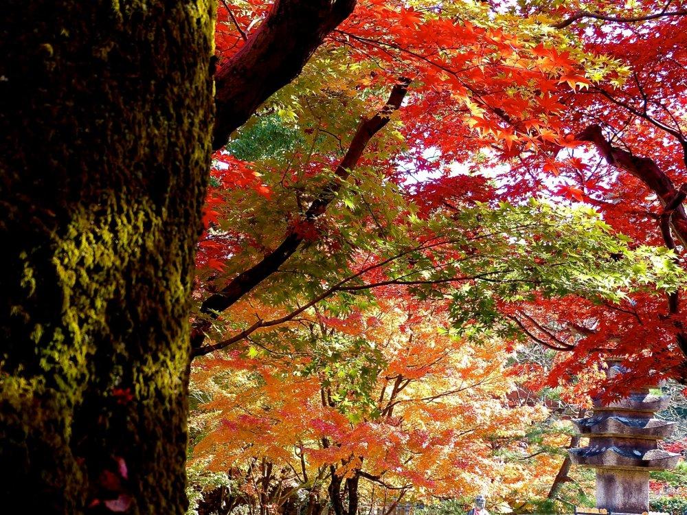 สีของฤดูใบไม้ร่วง