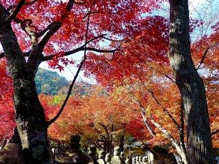 ใบไม้ของฤดูใบไม้ร่วงอันเจิดจรัส