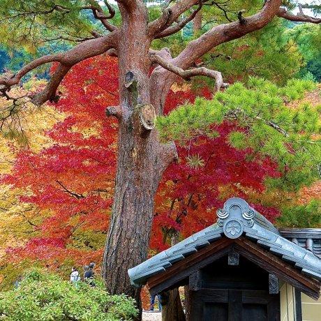 Đền Kodai-ji ở Kyoto