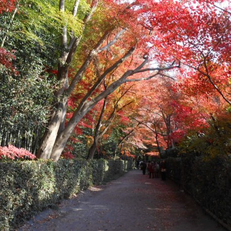 Chùa Heirinji Zen, thành phố Niiza
