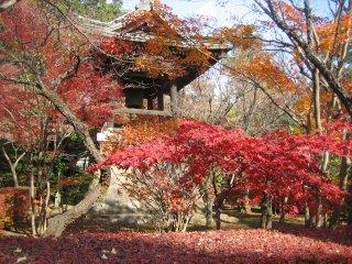 또한 종탑은 단풍나무로 둘러싸여 있다